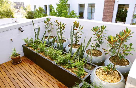 צמחים במרפסת