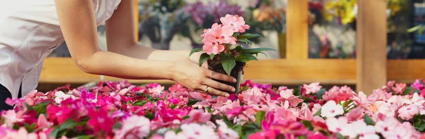 פינת הפרח נהריה