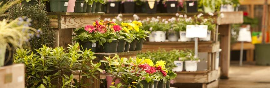 """רזין אביזרים לחנויות פרחים ומשתלות בע""""מ"""