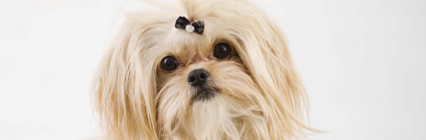 דוגשיק מספרת כלבים ניידת