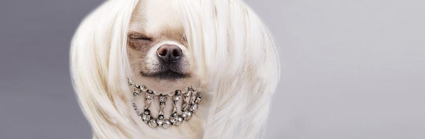 מספרת הכלבים של מלי