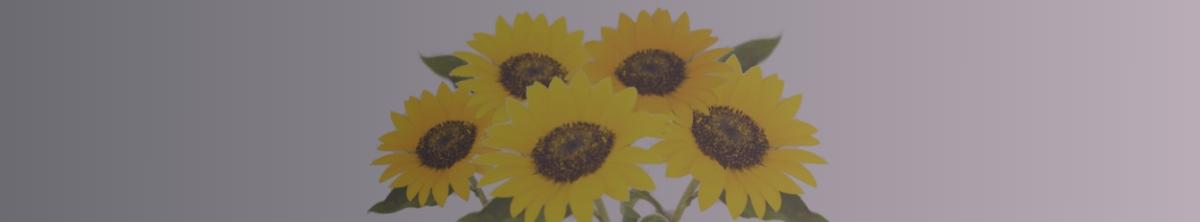 פרחים - תמונת אווירה