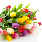 פרחים בקנה: הדרכים למשלוח והכנת זר פרחים
