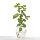 צמחייה הידרופונית - איך מגדלים, ומהם הצמחים הפופולאריים?