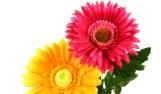 מהם פרחים חנוטים?