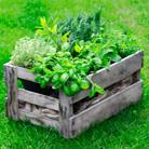 צמחי תבלין בעלי סגולות מרפא - גם טעים וגם בריא