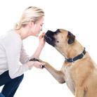 מאלף כלבים - אלוף הפיקוד של הכלב