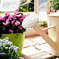 להכניס קצת צבע לחיים - המדריך המלא לגידול פרחים בבית