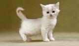 מזון לחתולים: איך נבחר את האוכל המתאים לחתול?