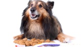 סוגי מזון לכלבים - איך בוחרים אוכל מתאים לכלב?