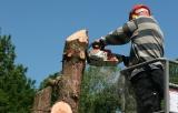 כריתת עצים מסוכנים