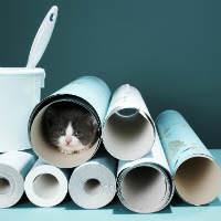 גור חתולים בתוך גלילי רול אפים