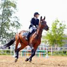 חוות סוסים: על חוויית הרכיבה ולמה היא טובה?