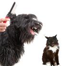 זהירות, כלב נושר: המדריך המלא למספרות כלבים