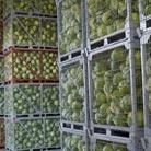 סיטונאות מזון - המדריך לספקי מזון למסעדות