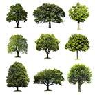 מדריך עצים - סוגי עצים נפוצים לשימוש