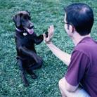 איך מאלפים כלב? אילוף כלבים - כללים חשובים