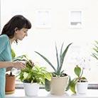 על צמחי בית ועל סוגי שתילים לגינה - מידע חשוב בכל עונה
