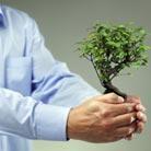 העתקת עצים - אם רק רוצים, אפשר גם להזיז עצים