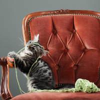 תרגישו בבית - הכורסאות שיפנקו אתכם