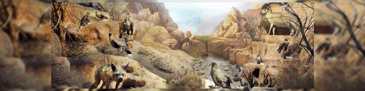 מוזיאון האדם והחי - תמונה ראשית