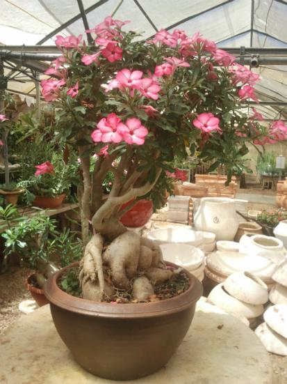 משתלה המתמחה בעיצוב צמחים