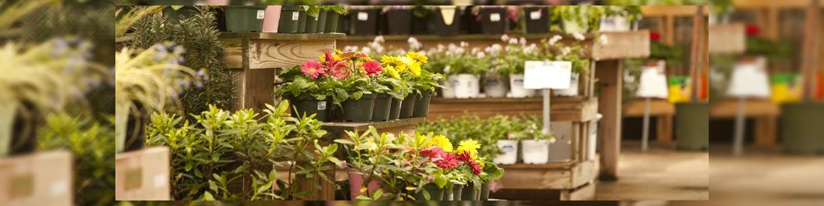 פרחי הפינה הירוקה - פרחים - תמונה ראשית
