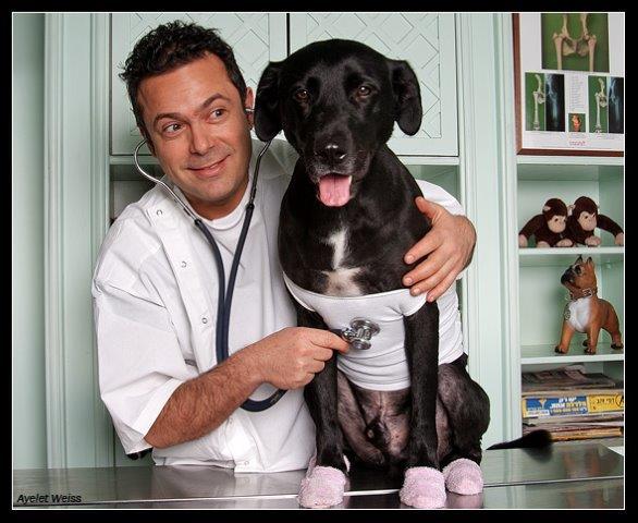 טיפולים רפואיים לבעלי חיים