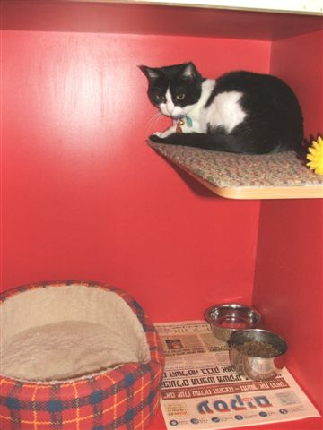 מרפאה עם פנסיון לחתולים