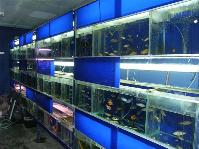 מכירת מבחר דגים