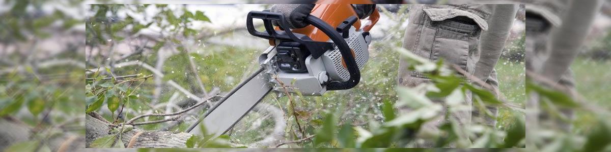 אלן כריתת עצים וגיזום - תמונה ראשית