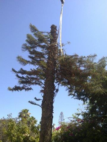 שירות כריתת עצים