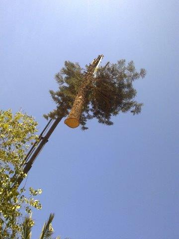 עקירת עצים