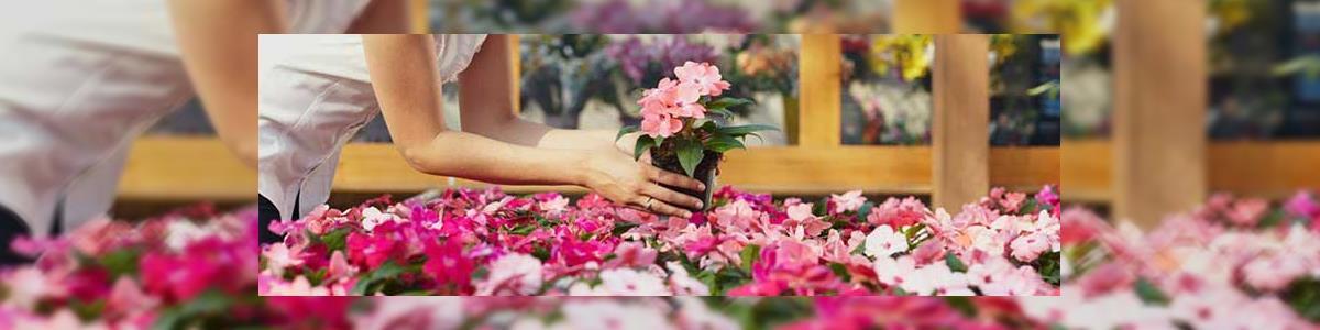 """בר פרחים וכלים לעיצוב הבית בע""""מ - תמונה ראשית"""