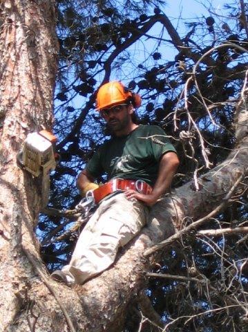 גיזום ופינוי עצים מסוכנים