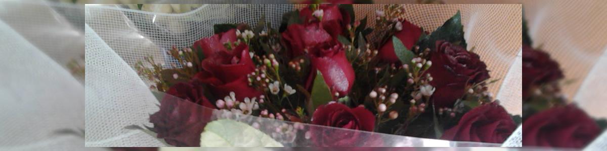 פרחי נרדי - תמונה ראשית