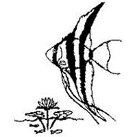 אקווה גן - דגי נוי