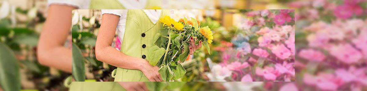 פרחי זהבה - תמונה ראשית