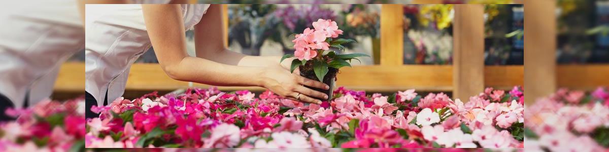 """אסתר מילר - שזירת פרחים בע""""מ - תמונה ראשית"""