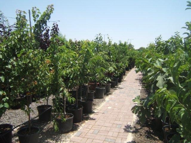 משתלה לעצים, עציצים וצמחים שונים
