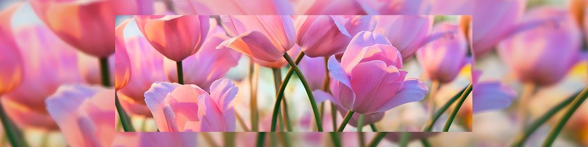 הפרח - תמונה ראשית