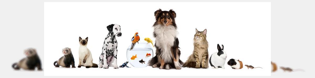 """כלבו לחיות-בית בע""""מ - תמונה ראשית"""