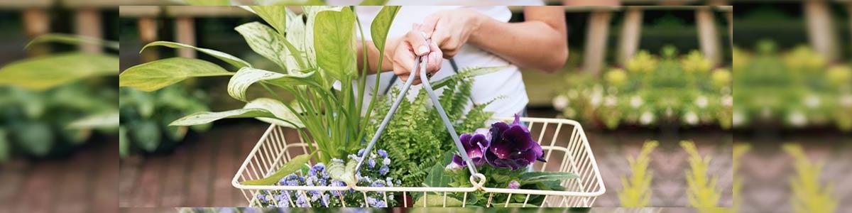 פרחי סמדר - תמונה ראשית