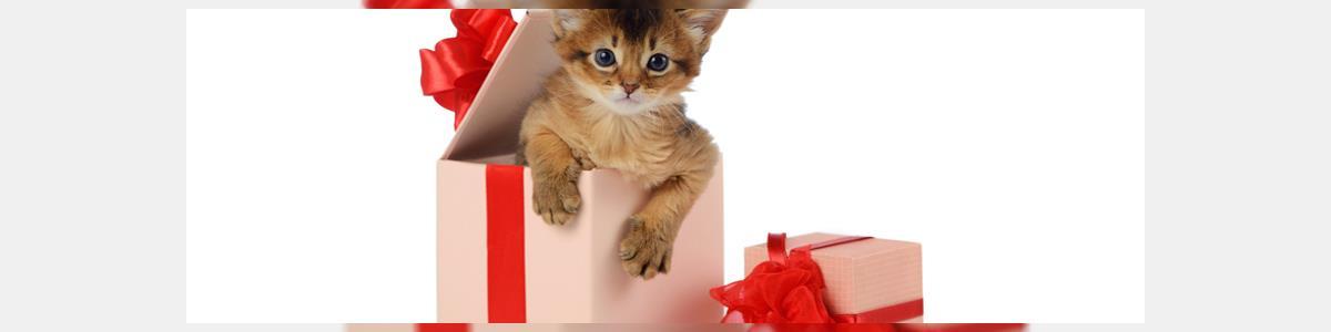 איגואנה חנות חיות - תמונה ראשית