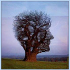 אומנות בעץ