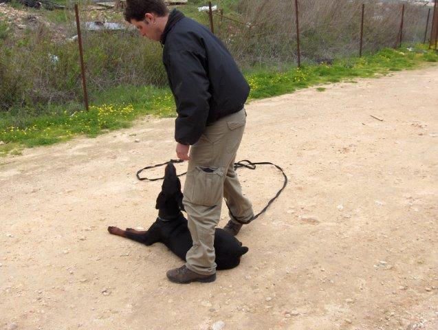 טיפול בבעיות התנהגות בכלבים