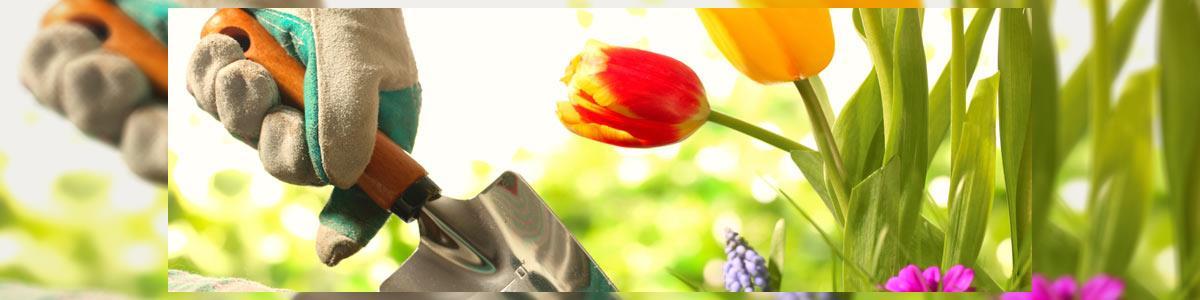 אמן גן - קבלני גינון - תמונה ראשית