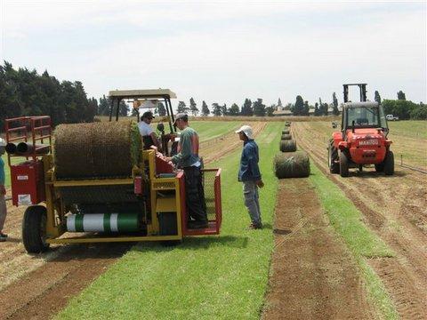 אספקת דשא מוכן בגלילים, מרבדים ועוד