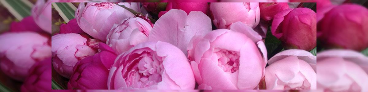 איינשטיין פרחים 2lip - תמונה ראשית