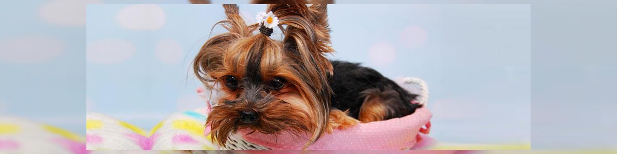 ספא דוג - מספרה ניידת לכלבים - תמונה ראשית